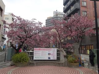 0206sakura2.jpg