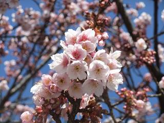 0218itogawa4_20120222073519.jpg