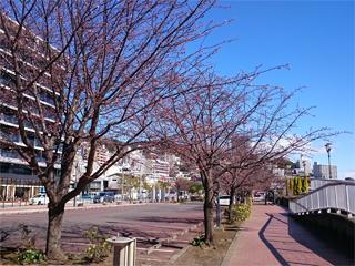 0221sakura1.jpg
