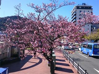 0221sakura3(1).jpg