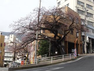 0225sakura07.jpg