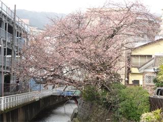 0225sakura10.jpg