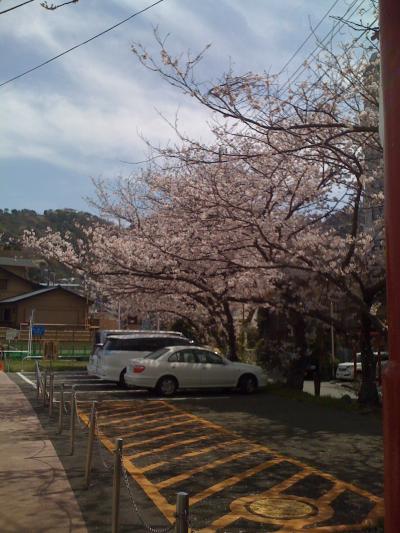 大縄海水浴場前、お浜の桜01