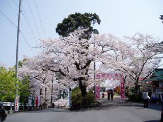 0407sakura2_20140228074046ba1.jpg