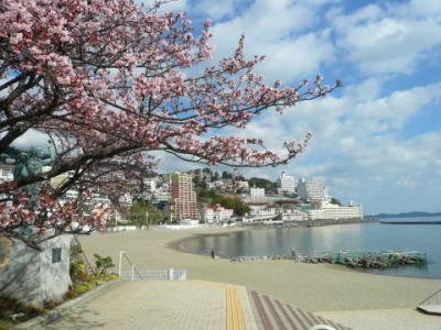 「あたみ桜」サンビーチ