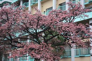 サンレモ公園(平成22年2月12日撮影)
