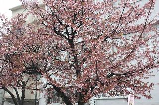 糸川基準木(平成22年2月12日撮影)