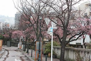 糸川遊歩道 (平成22年2月12日撮影)
