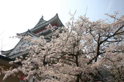 熱海城桜まつり02
