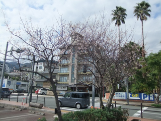 hanabi05_20111127072024.jpg
