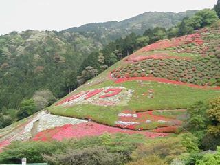 himenosawa_20140414091323ea2.jpg