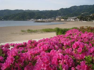 長浜海水浴場のツツジです。