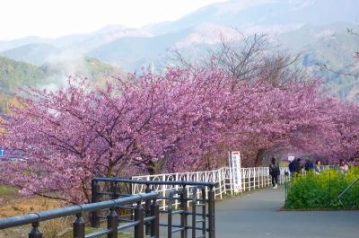 笹原公園周辺