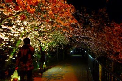 夜桜ライトアップ会場周辺