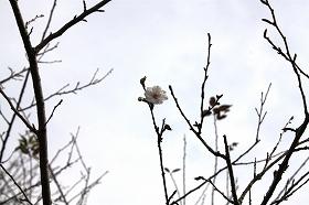 kobuku.jpg