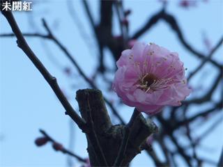 mikaikou1.jpg