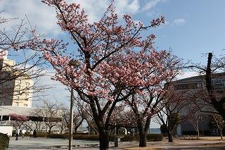 「あたみ桜」マリンスパ