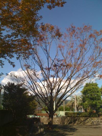 tomoko+246_convert_20091104075403.jpg